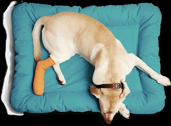Ozdravljen pes
