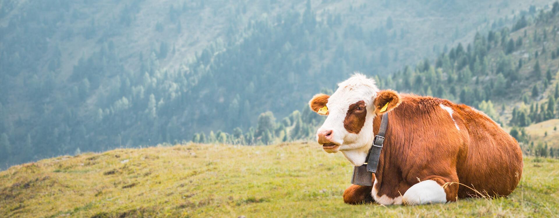 Kmetijstvo in zdrave živali