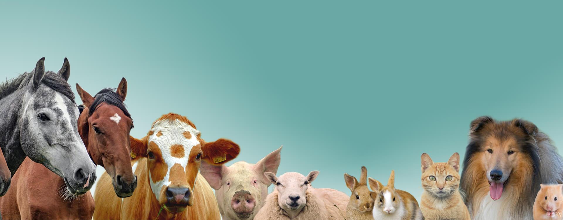 Naši veterinarji vam nudijo širok nabor različnih storitev od svetovanja do zdravljenja